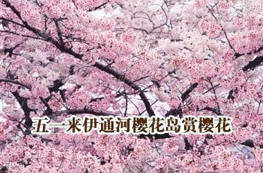 五一来伊通河樱花岛赏樱花