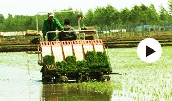 德惠市进入水稻适宜插秧期