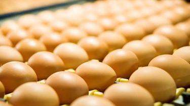"""库存量略减少走货加快 本周无需申请自动送彩金58鸡蛋价格""""不淡定'"""