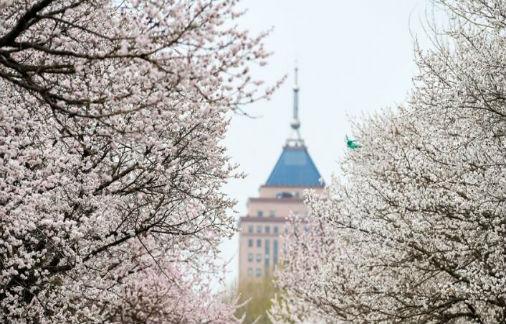 吉大南岭杏花节开幕 汉服飘飘花满园 美翻了