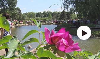 牡丹扮靓美春城 ——第三届长春牡丹文化节今日开幕