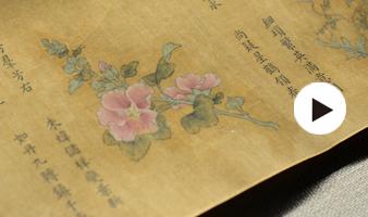 欣赏|省博院藏国宝《百花图卷》