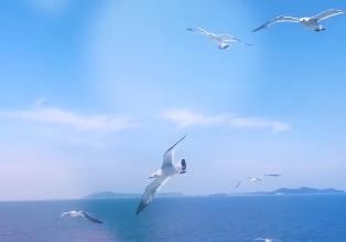 大海的回音