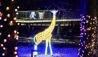 2019新春灯展在澳门博彩在线娱乐水文化生态园点亮