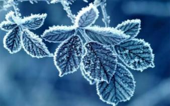 二十四节气之霜降