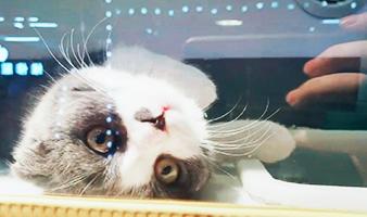 猫猫大集合