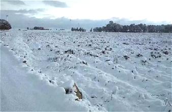 春城三月雪 缓旱利春耕