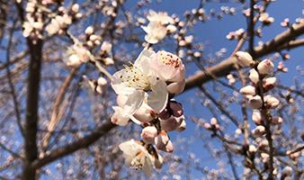 面朝花海,春暖花开!
