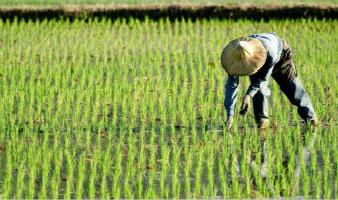 2019年重点强农惠农政策来了!