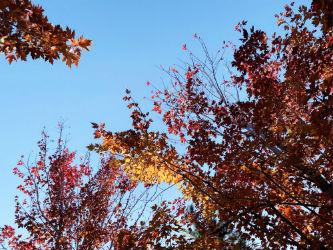 秋色缤纷惹人喜长春友谊公园红叶美景看不厌