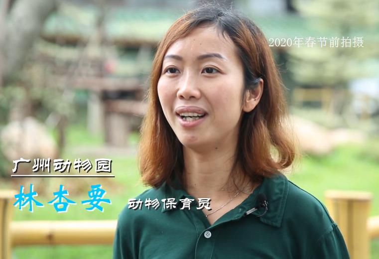 广州80后大熊猫铲屎官,只愿守护那一株呆萌