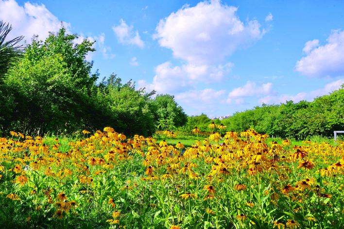长春公园野花园繁花盛开 大部分