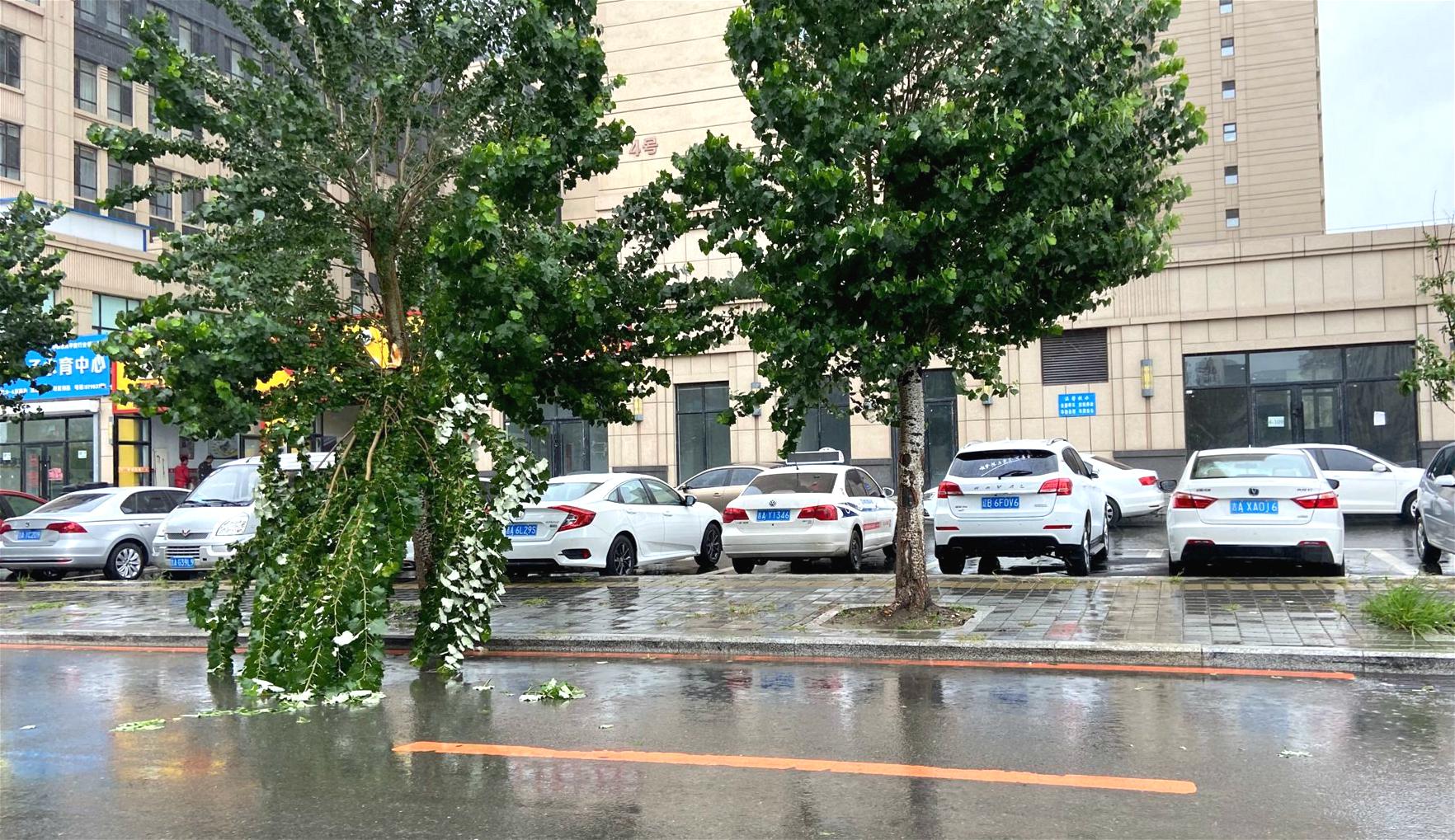 长春市自由大路银川街树木折断 过往行人车辆注意避让