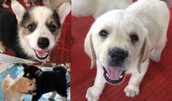 8月19日,第十九届长春农博会宠物展区里,活泼可爱的宠物们给参观者带来...