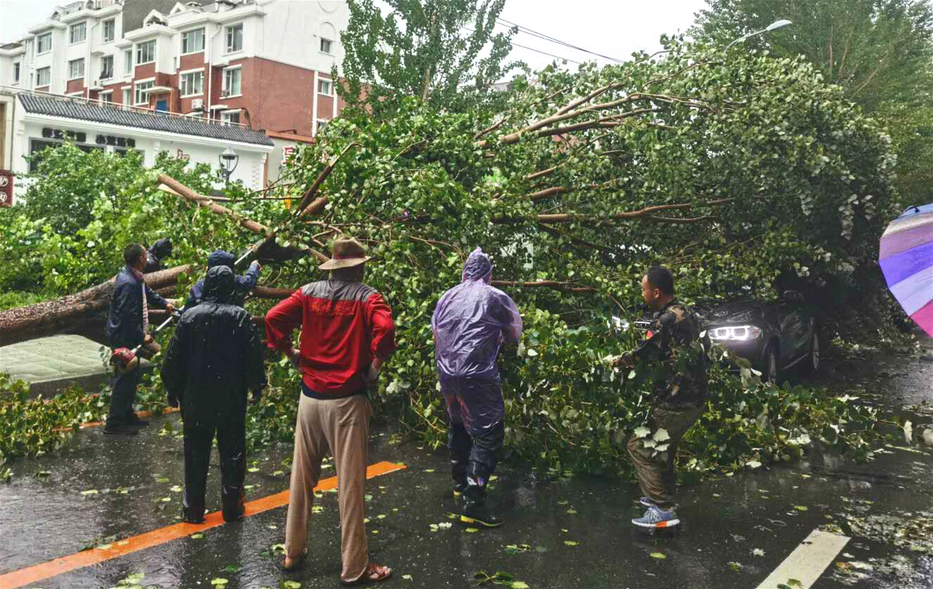 长春市临河街与世荣路交汇处被断树压倒车辆已安全移出