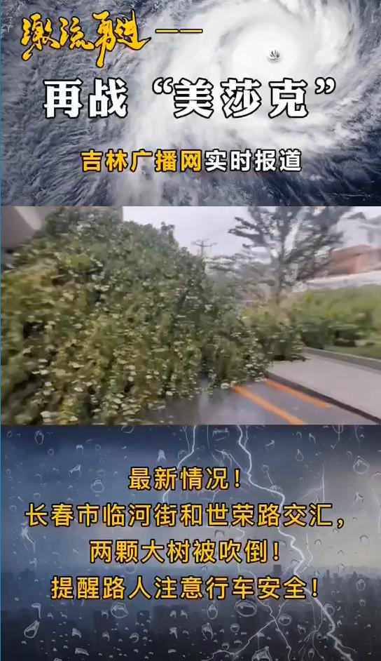 最新情况!长春市临河街与世荣路交汇,两棵大树被吹倒!提醒路人注意行车...