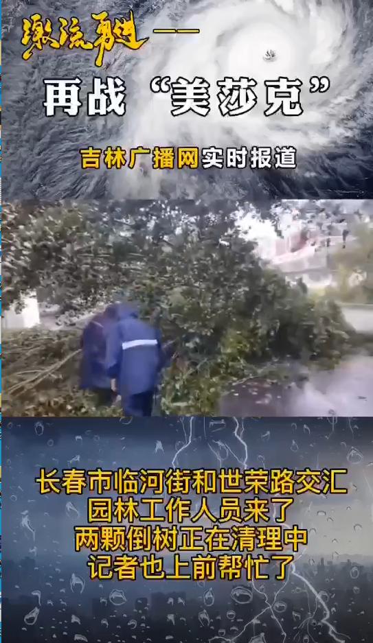 园林工作人员清理两棵倒树 吉林广播网记者也上前帮忙