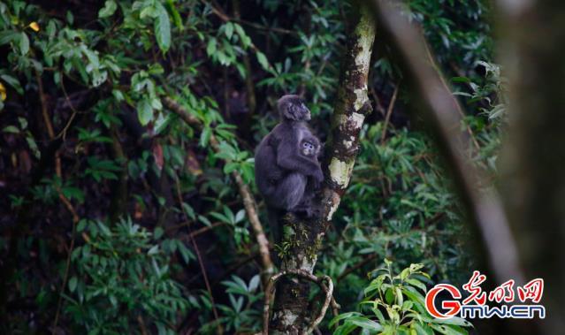 云南已建362处自然保护地 50种野生动物种群数量增加
